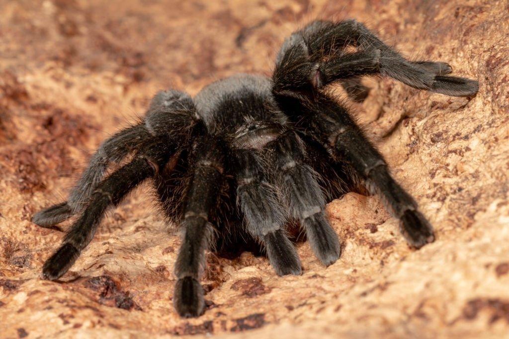 Araña - Significado Y Simbolismo De Los Sueños 4