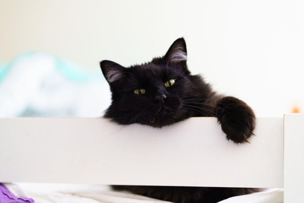 Gato – Significado Y Simbolismo De Los Sueños 2
