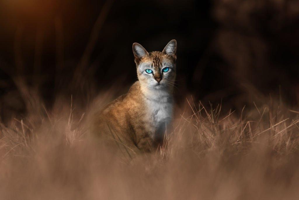 Gato – Significado Y Simbolismo De Los Sueños 6