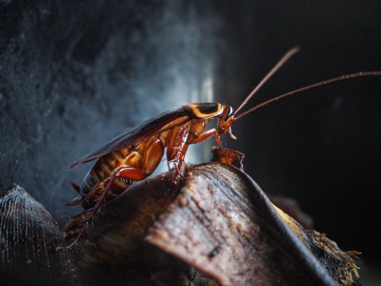 Cockroach - Dream Meaning and Symbolism 1