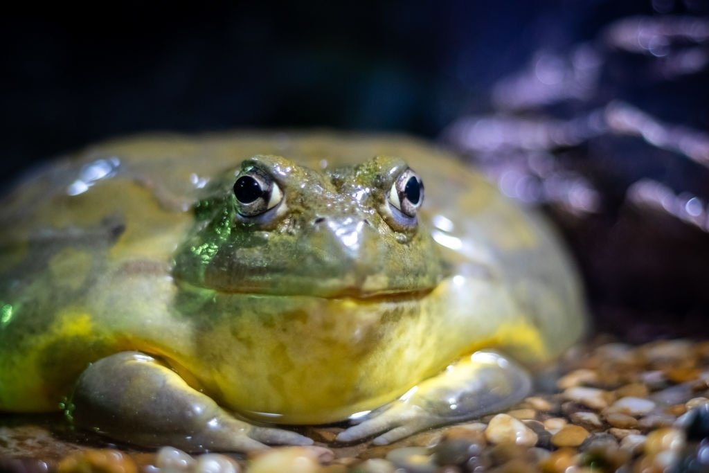Frog - Dream Meaning and Symbolism 4