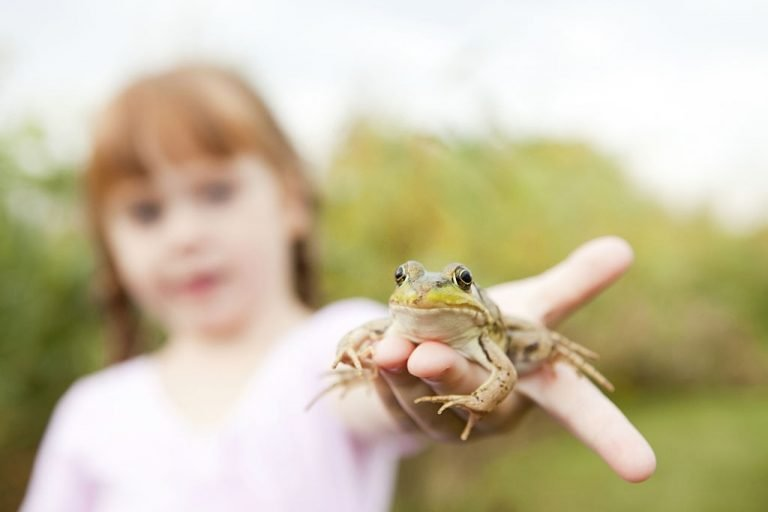 Frog - Dream Meaning and Symbolism 1