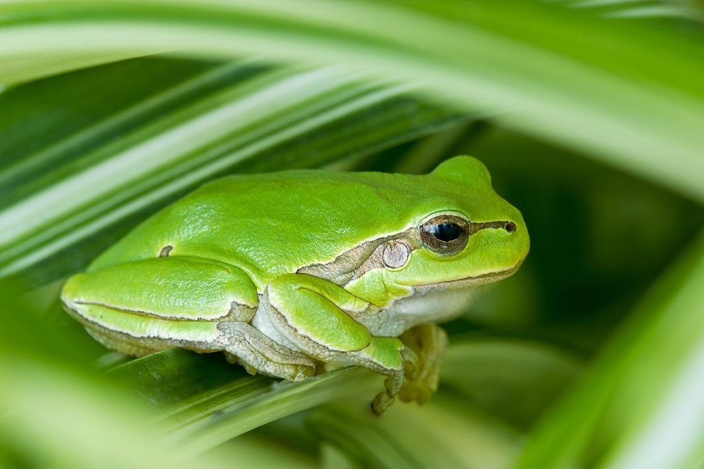 Frog - Dream Meaning and Symbolism 3