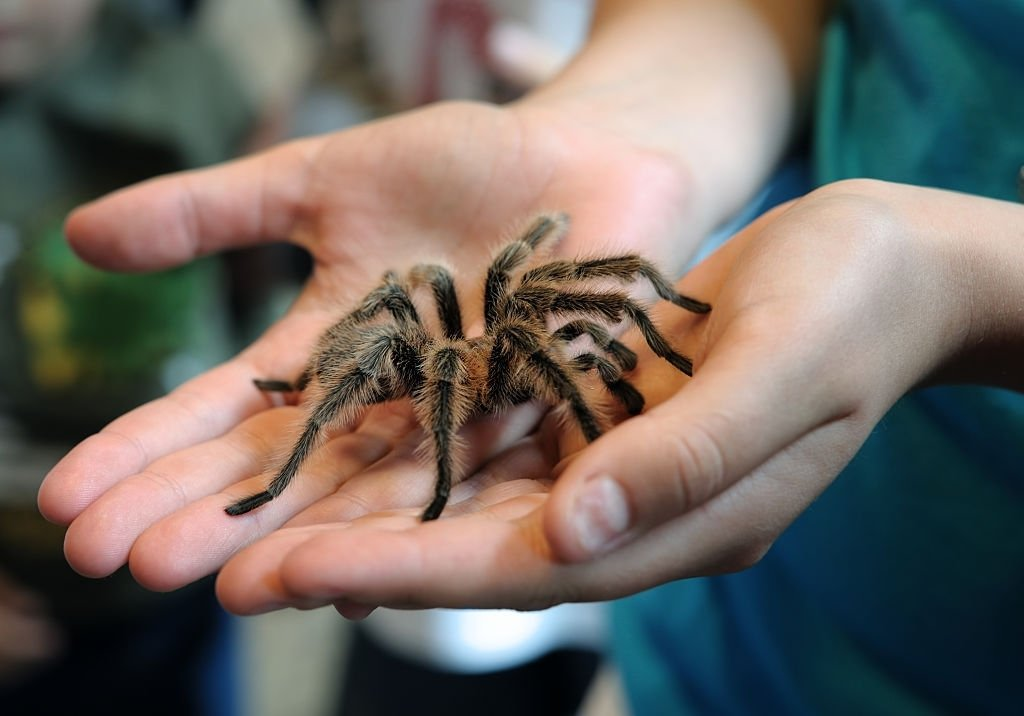 Araña - Significado Y Simbolismo De Los Sueños 5