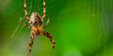 Spider - Dream Meaning and Symbolism 121