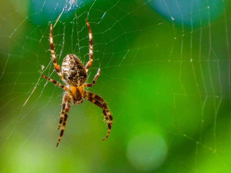 Spider - Dream Meaning and Symbolism 1