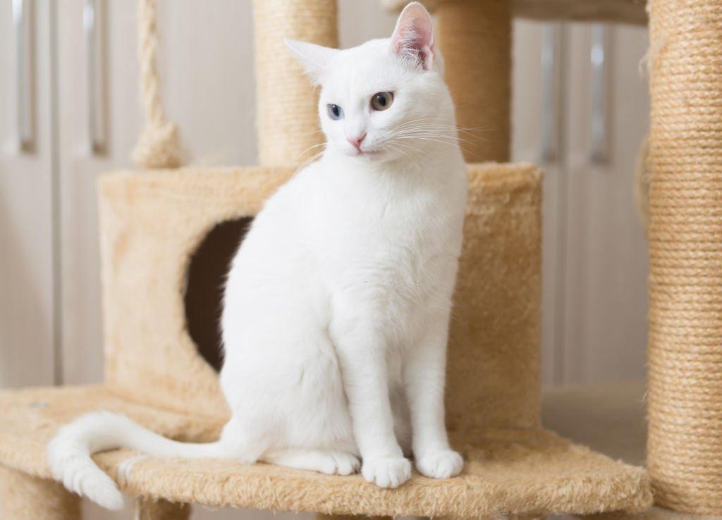 Gato – Significado Y Simbolismo De Los Sueños 1