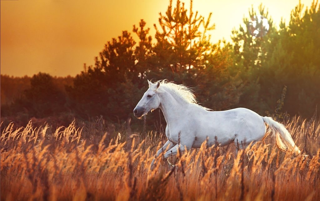 Horse - Dream Meaning and Symbolism 3