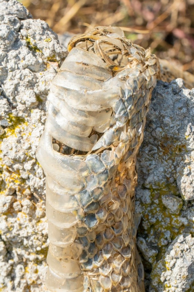 Dead Snake – Dream Meaning and Symbolism 5