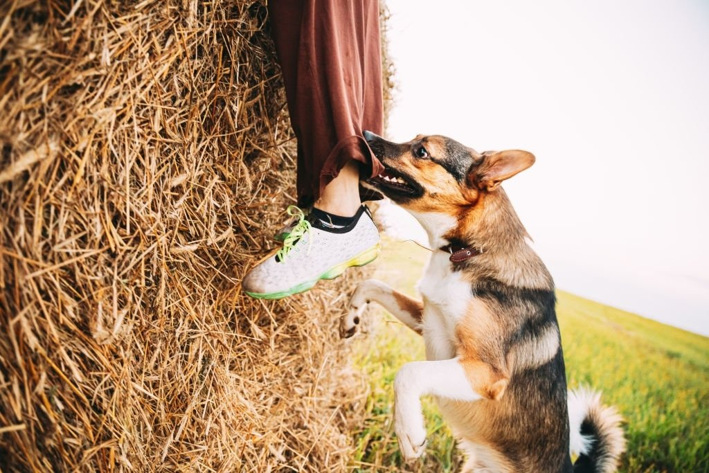 Dog Biting – Dream Meaning and Symbolism 5