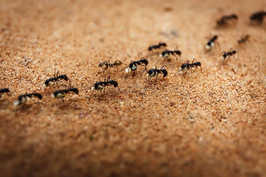 Ant – Dream Meaning and Symbolism 5