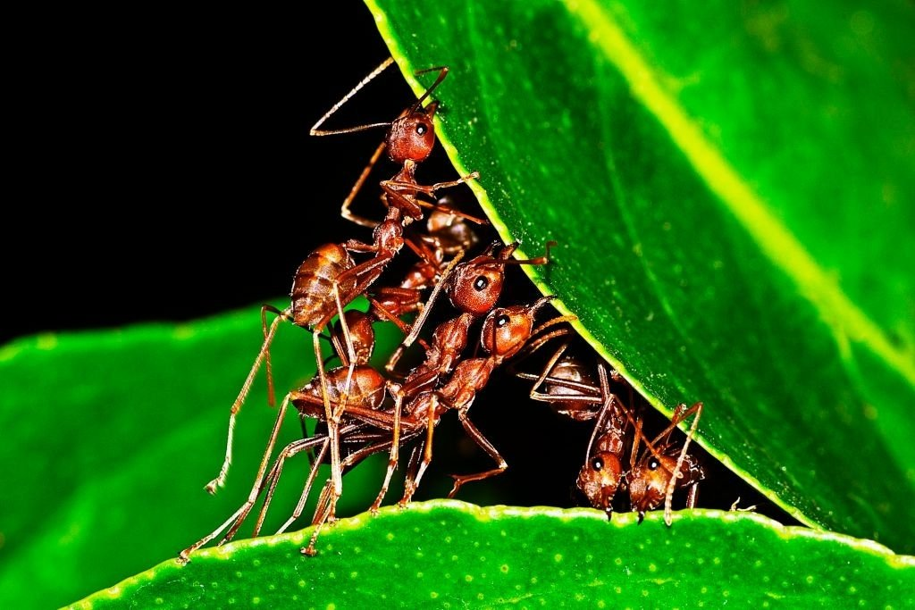 Ant – Dream Meaning and Symbolism 3