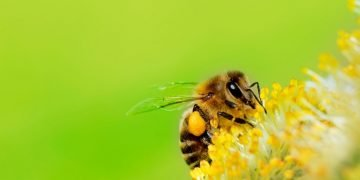 Bee – Dream Meaning and Symbolism 17
