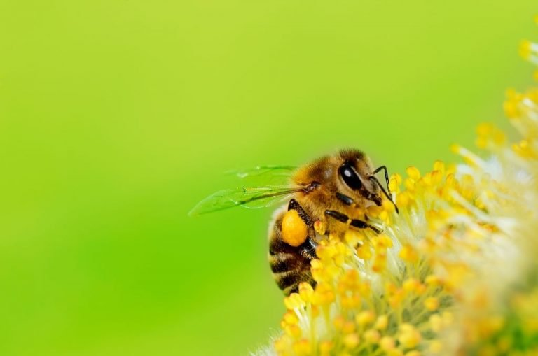 Bee – Dream Meaning and Symbolism 1