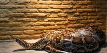 Big Snake – Dream Meaning and Symbolism 118