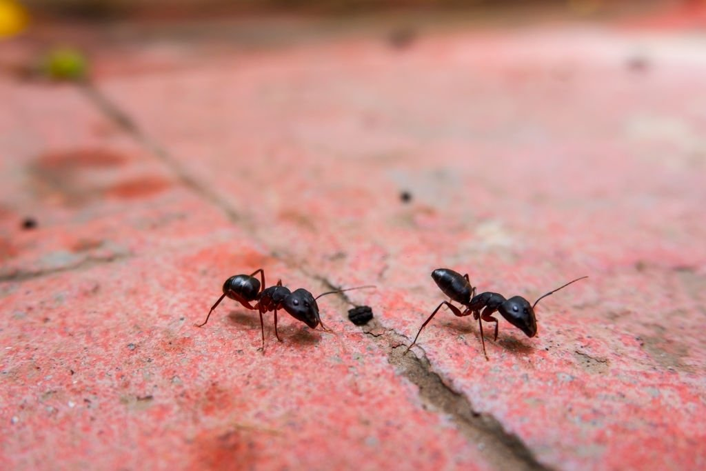 Ant – Dream Meaning and Symbolism 2
