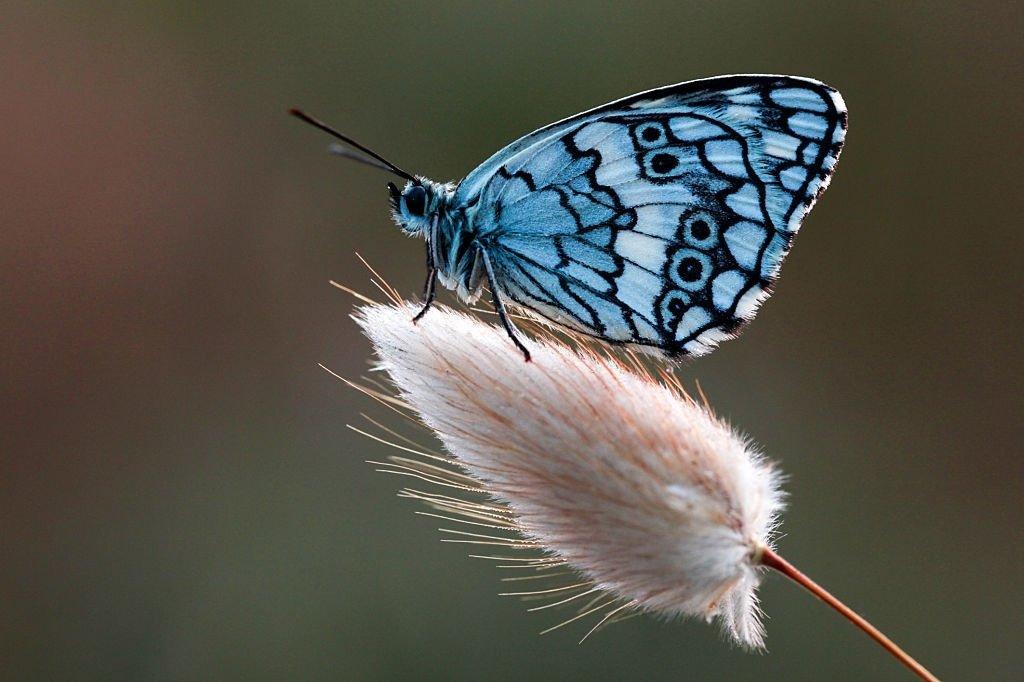 Mariposa – Significado Y Simbolismo De Los Sueños 6