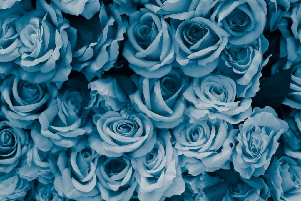 Flores – Significado Y Simbolismo De Los Sueños 7