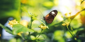 Butterfly – Dream Meaning and Symbolism 75