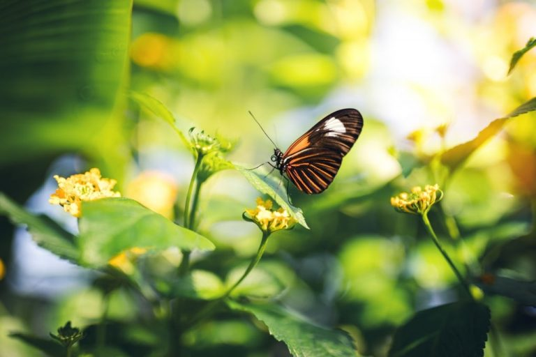 Butterfly – Dream Meaning and Symbolism 1