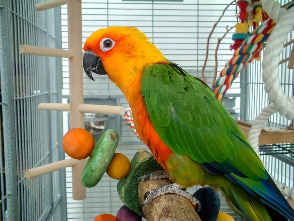 Parrot – Dream Meaning and Symbolism 6