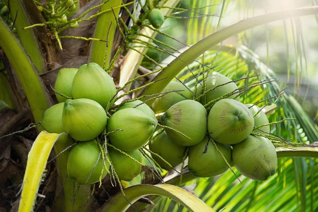Coconut – Dream Meaning and Symbolism 5