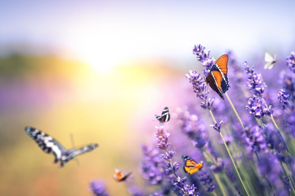 Mariposa – Significado Y Simbolismo De Los Sueños 5