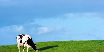 Cow – Dream Meaning and Symbolism 58