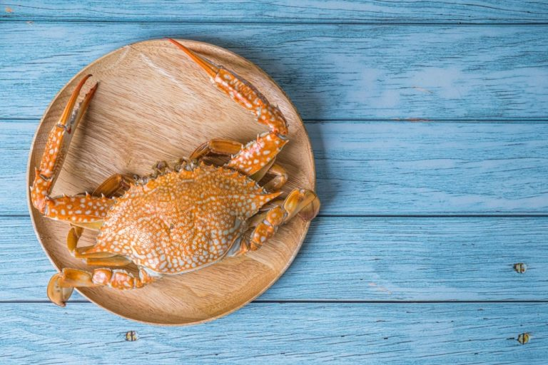 Crab – Dream Meaning and Symbolism 1