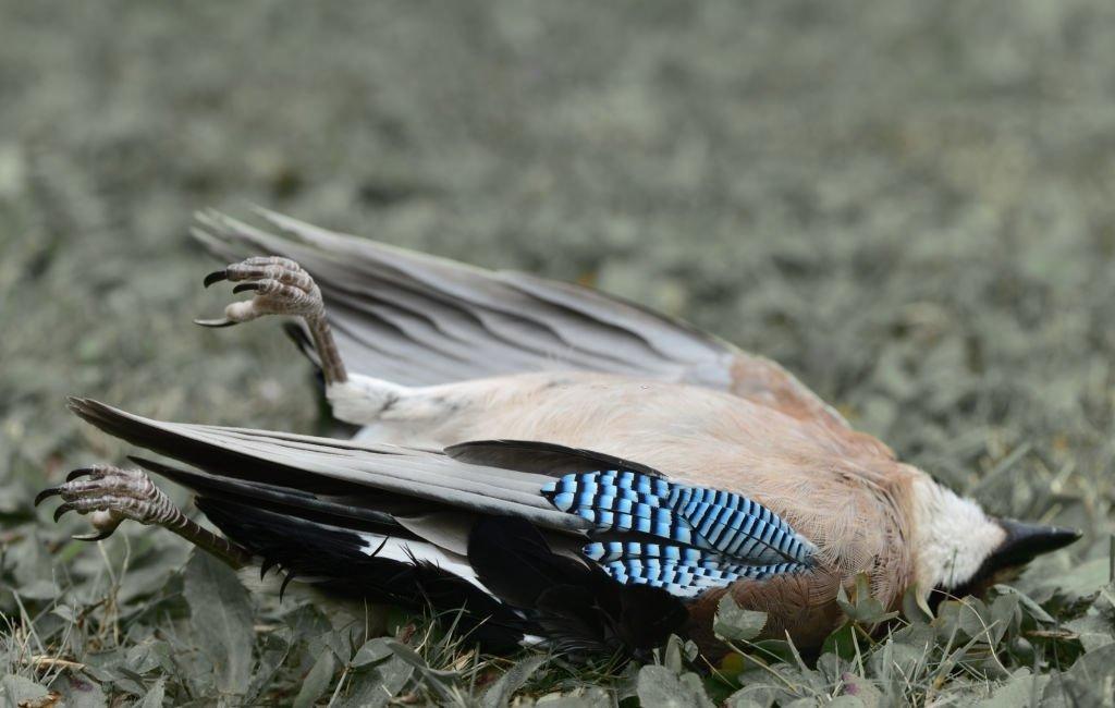 Pájaro - Significado Y Simbolismo De Los Sueños 5