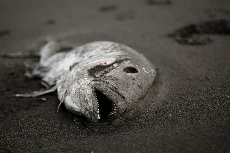 Dead Fish – Dream Meaning and Symbolism 1