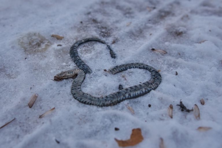 Dead Snake – Dream Meaning and Symbolism 1