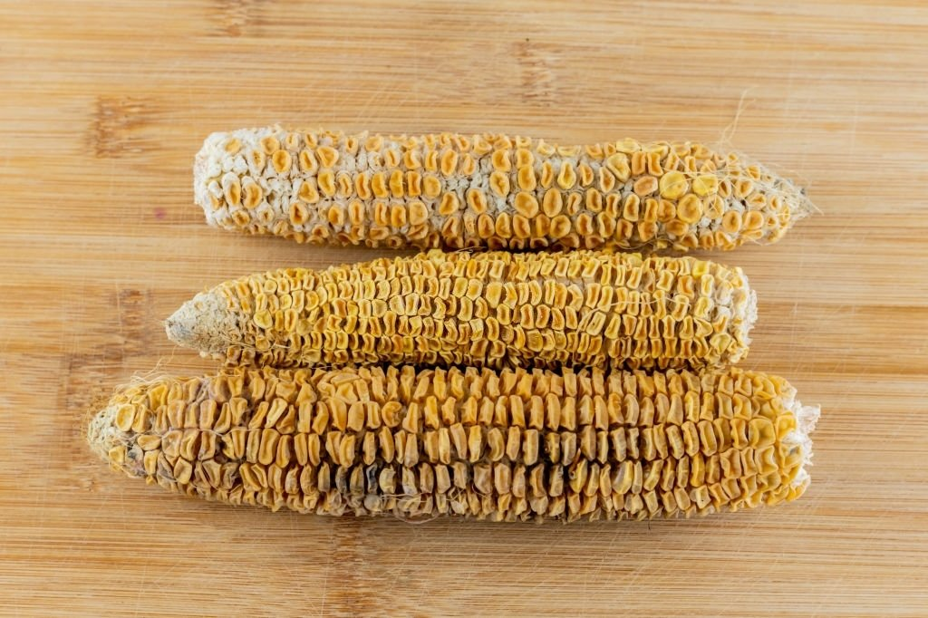 Corn – Dream Meaning and Symbolism 6