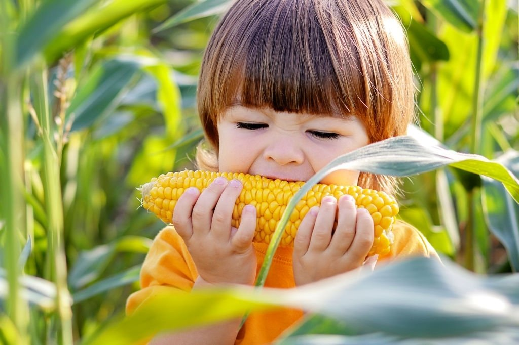 Corn – Dream Meaning and Symbolism 3
