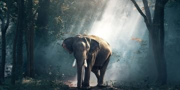 Elephant – Dream Meaning and Symbolism 36