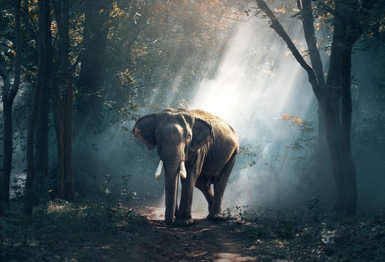 Elephant – Dream Meaning and Symbolism 1