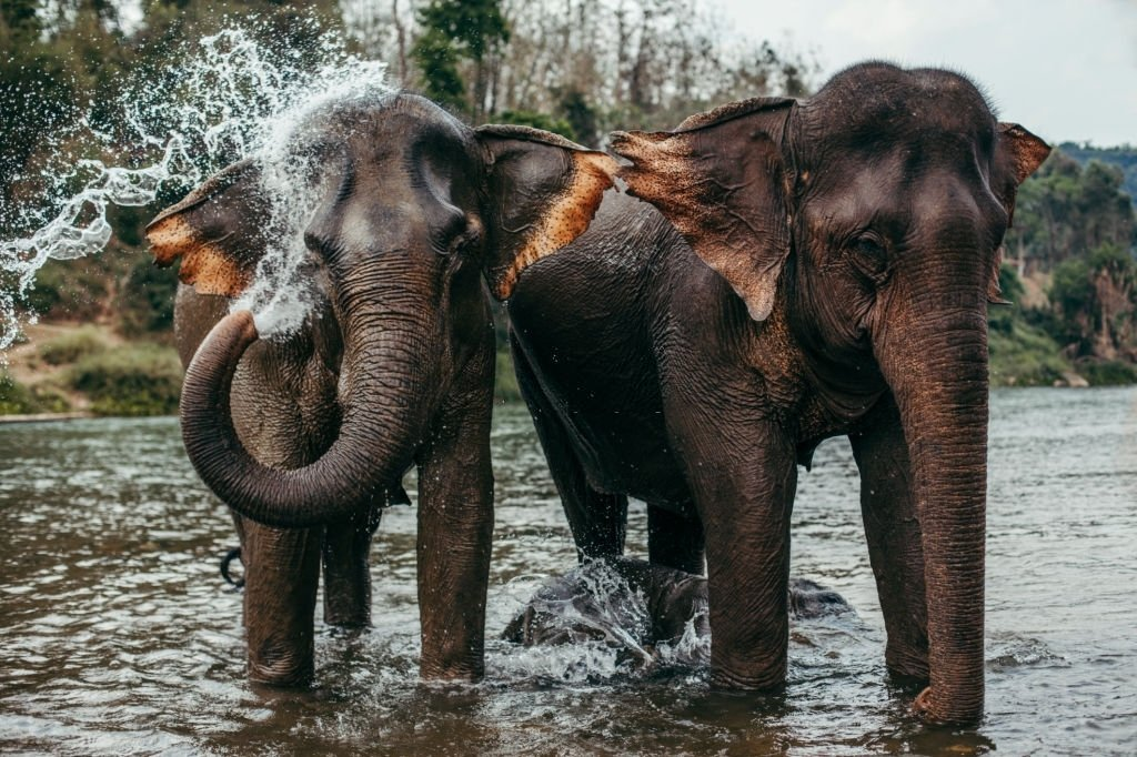 Elephant – Dream Meaning and Symbolism 4