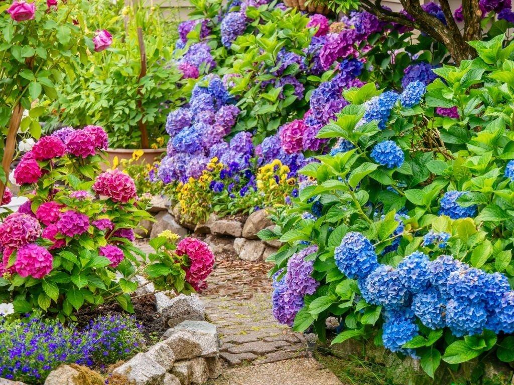 Flores – Significado Y Simbolismo De Los Sueños 5
