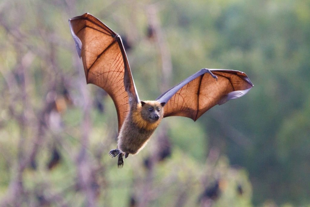 Bat – Dream Meaning and Symbolism 3