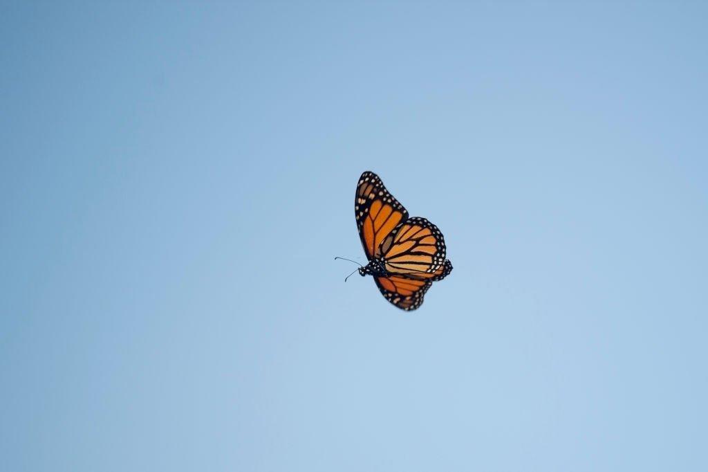 Mariposa – Significado Y Simbolismo De Los Sueños 4