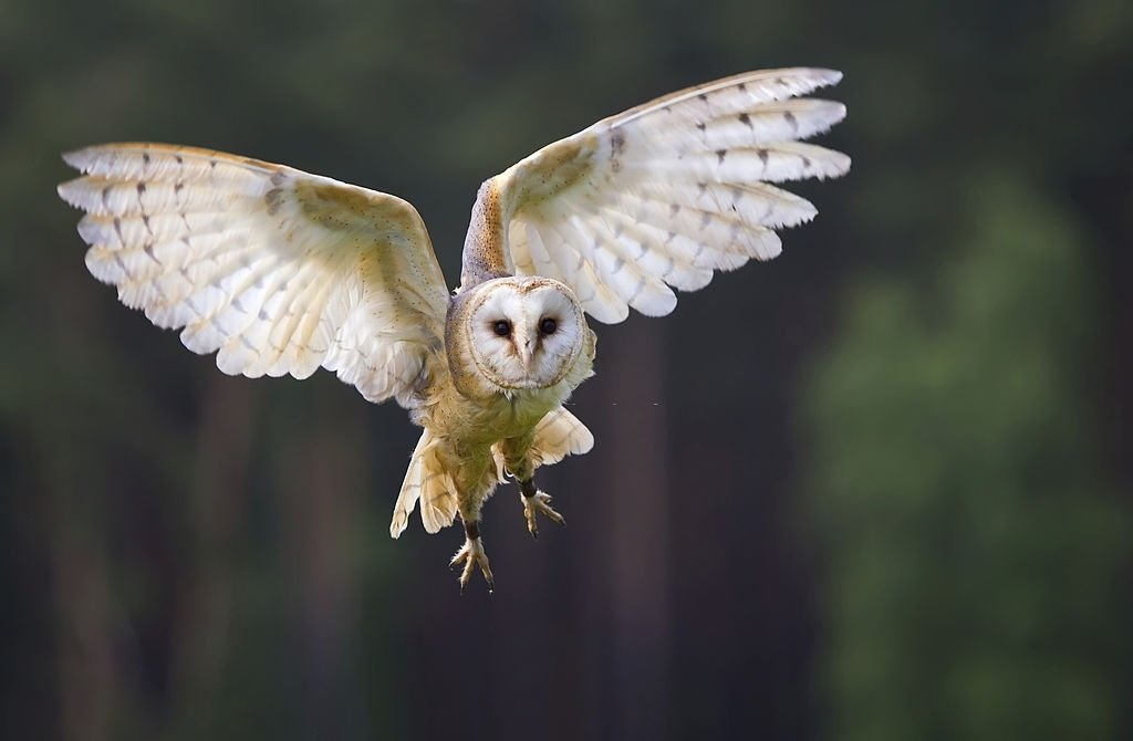 Owl – Dream Meaning and Symbolism 3