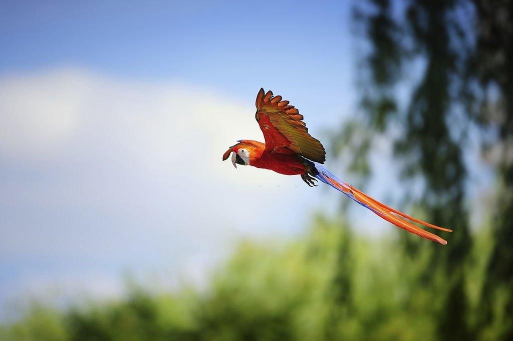 Parrot – Dream Meaning and Symbolism 3