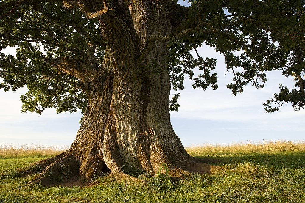 Tree – Dream Meaning and Symbolism 6