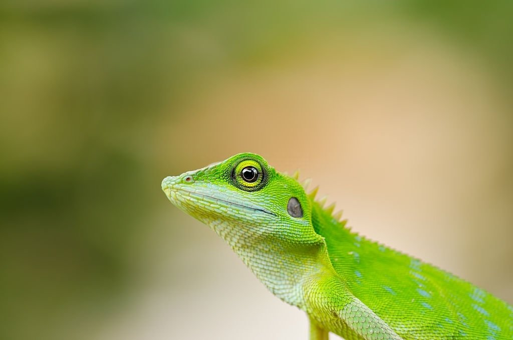 Lizard – Dream Meaning and Symbolism 5