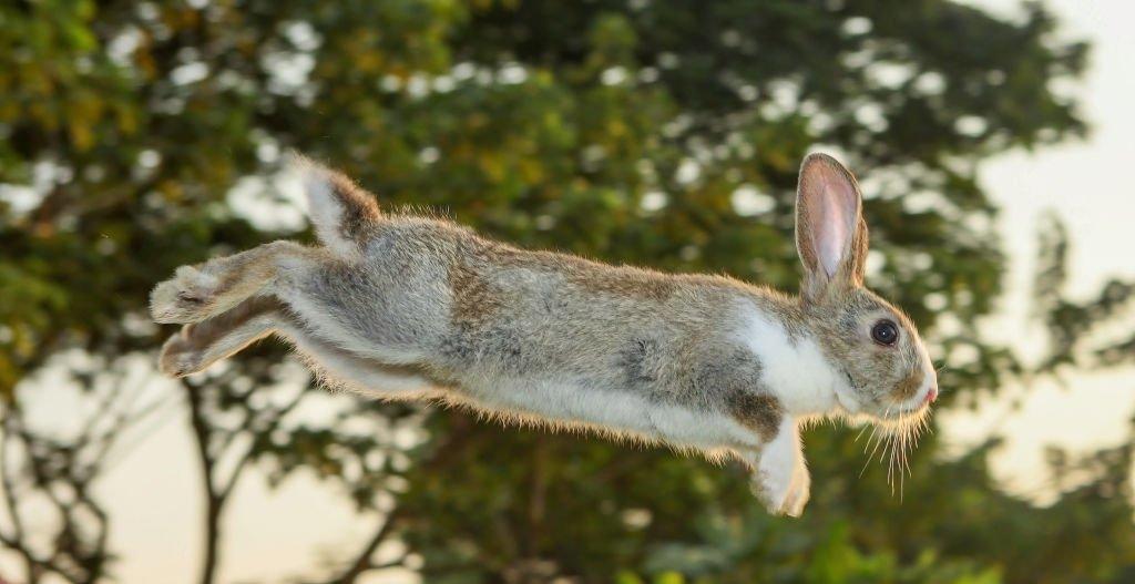 Conejo – Significado Y Simbolismo De Los Sueños 4