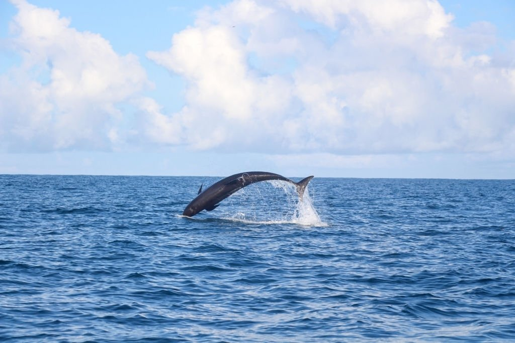 Whale – Dream Meaning and Symbolism 5