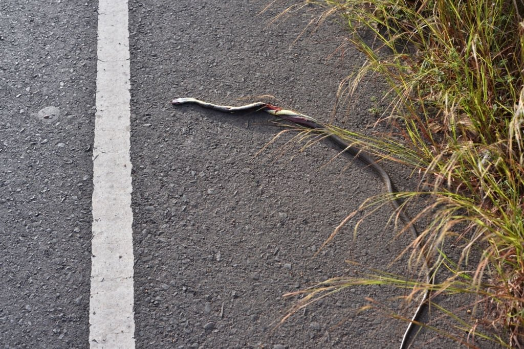 Dead Snake – Dream Meaning and Symbolism 3