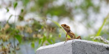 Lizard – Dream Meaning and Symbolism 110
