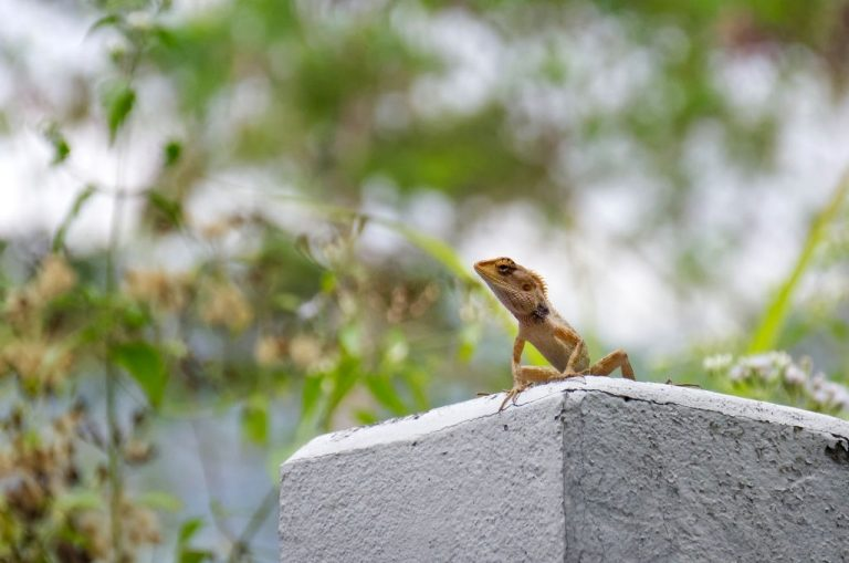 Lizard – Dream Meaning and Symbolism 1