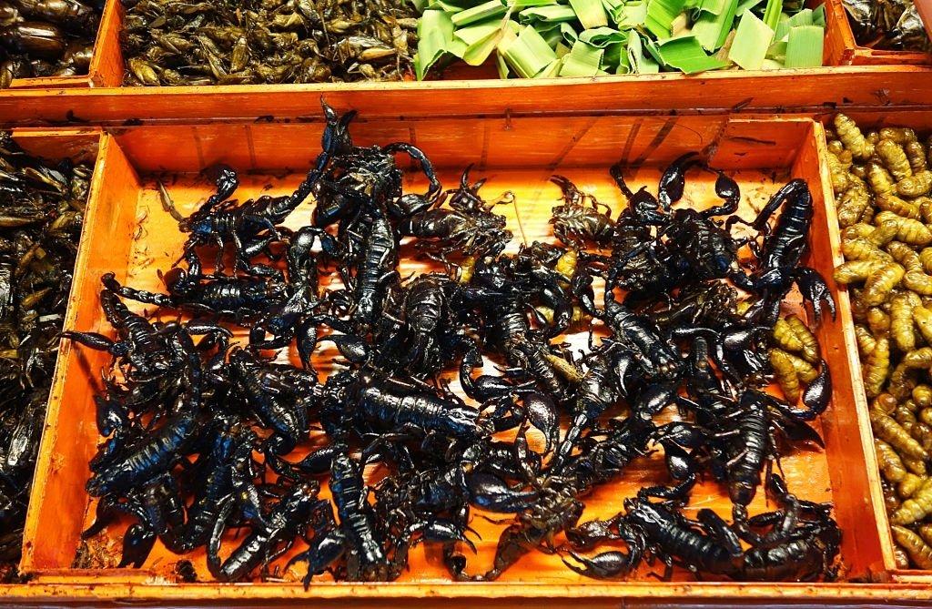 Escorpión – Significado Y Simbolismo De Los Sueños 5